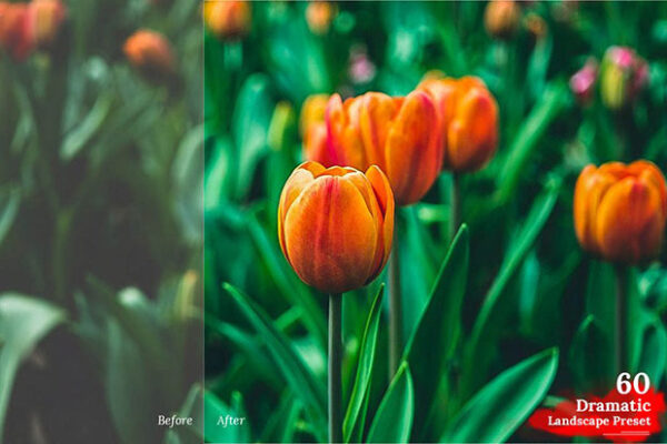 دانلود 325 پریست رنگی لایت روم عکاسی Lightroom Preset Mega Pack