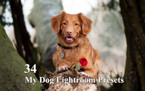 34 پریست لایت روم عکس حیوانات My Dog Lightroom Presets