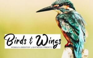 34 پریست لایت روم و کمرا راو حیوانات Birds Wings Mobile And Desktop Lightroom Presets