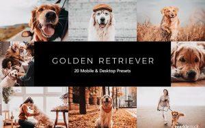 ۲۰ پریست لایت روم و پریست کمرا راو و LUT رنگی تم سگ باهوش Golden Retriever LR Presets