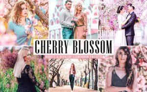 ۳۴ پریست لایت روم و Camera Raw و اکشن فتوشاپ تم شکوفه گیلاس Cherry Blossom Lightroom Presets