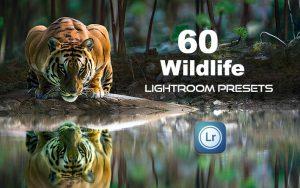 60 پریست رنگی لایت روم برای عکاسی حیات وحش Wildlife Lightroom Presets