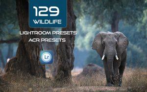 129 پریست لایت روم رنگی حیوانات و پریست کمراراو Wildlife Lightroom ACR Presets