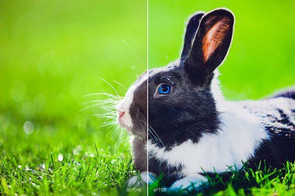 110 پریست لایت روم رنگی حیوانات و پریست کمراراو Animal Lightroom ACR Presets