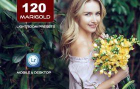 120 پریست لایت روم و پریست کمرا راو فتوشاپ و LUTs تم گل همیشه بهار Marigold Lightroom Presets LUTs
